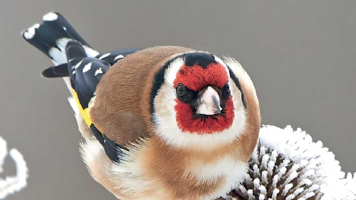 """Featured image for """"Apéro#12 : Noyelles-sur-Mer, Ché noms d'oiseaux in picard"""""""