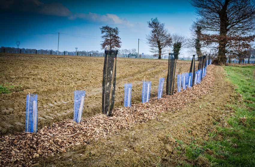 """Featured image for """"[Marchés publics] Travaux de plantation de haies"""""""